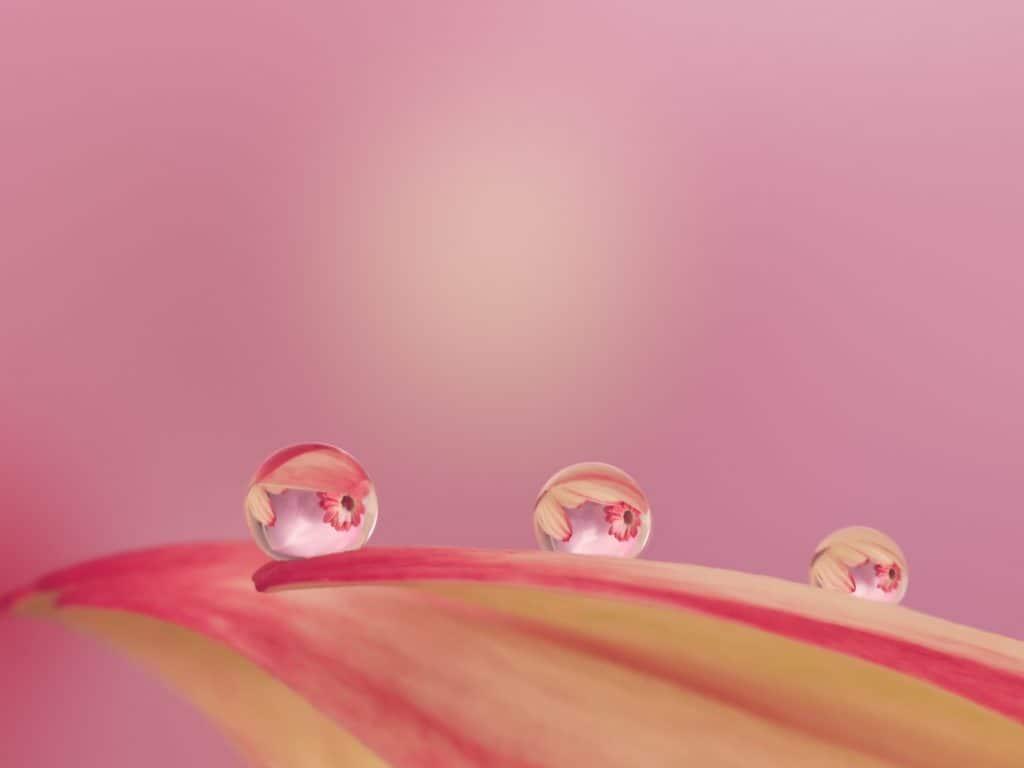 Scherpe Waterdruppels op een blad in de dauw