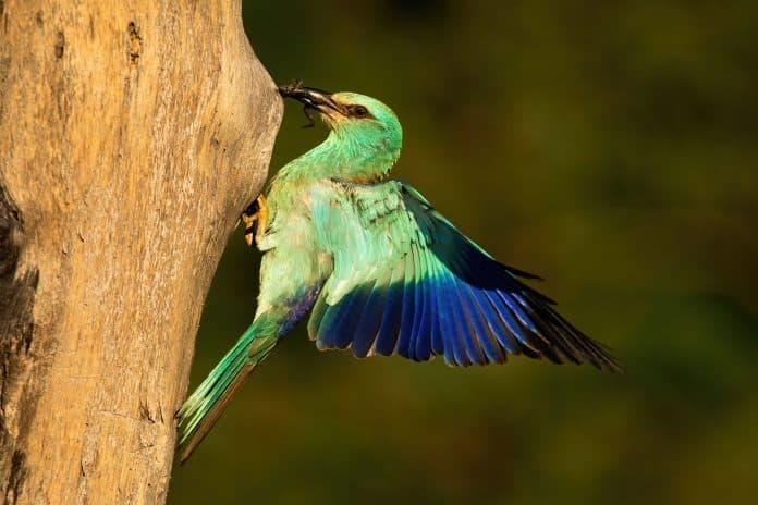 Vogel om scherptediepte aan te tonen