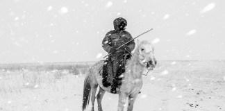 Horse Head - Frederik Buyckx 1