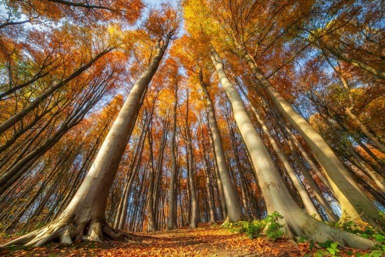 Fotograferen in het bos: Bomen als onderwerp