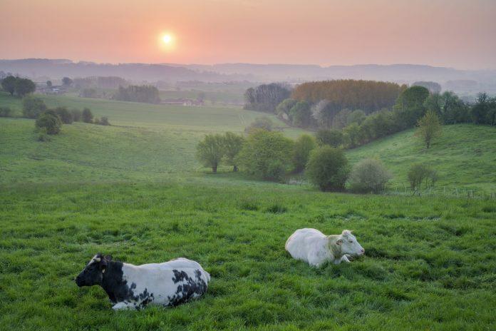 Voorgrond achtergrond Natuurfotografie Bart Heirweg