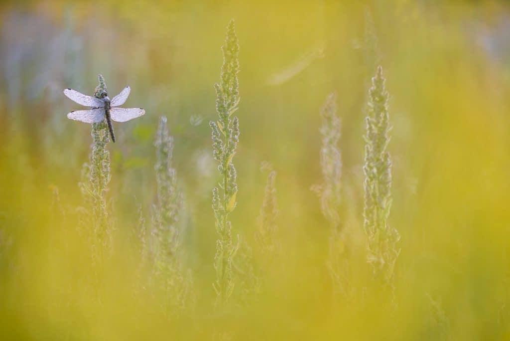 Natuurfotografie Bart Heirweg
