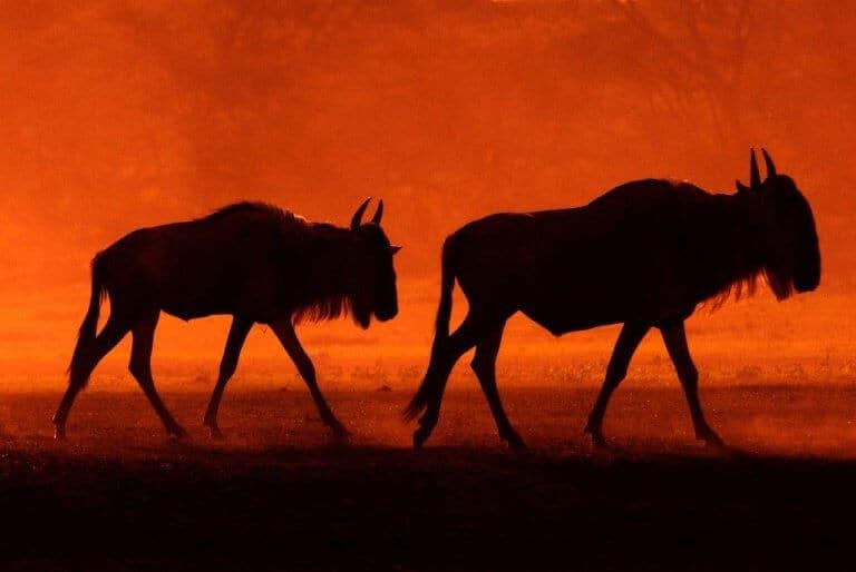 Reisfotografie: Op safari in Tanzania
