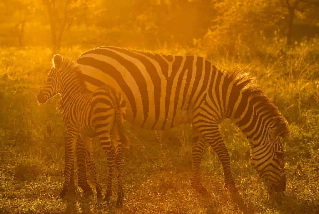 Tanzania safari fotografie