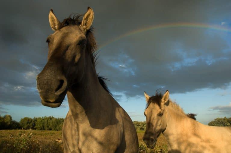 De Gelderse Poort: Natuurfotografie tussen Nederland en Duitsland