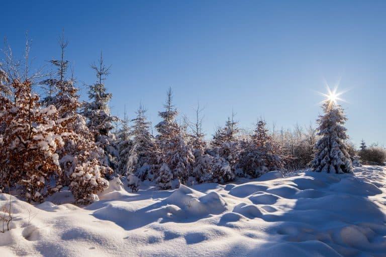 Winterfotografie in de Belgische Hoge Venen
