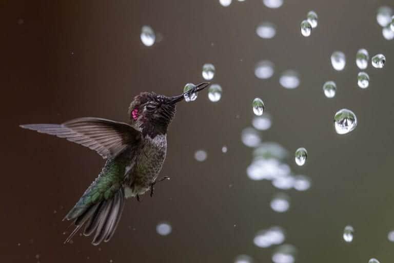 Dit zijn de beste vogelfoto's van de Audubon Photography Awards 2020