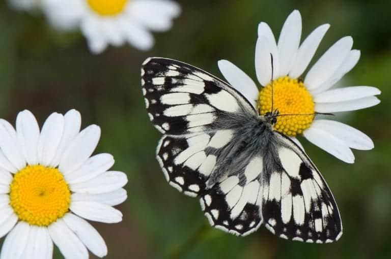 Fotografietips: Zomertijd, vlindertijd