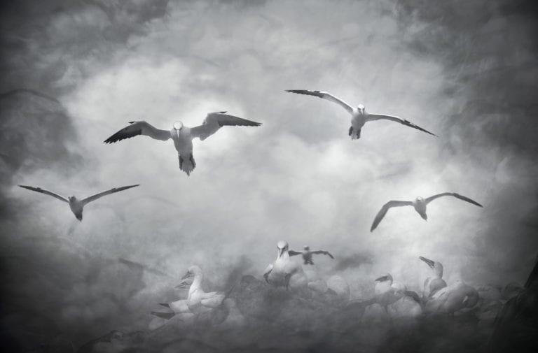 Dit zijn de beste vogelfoto's van Emotion'Ailes 2020