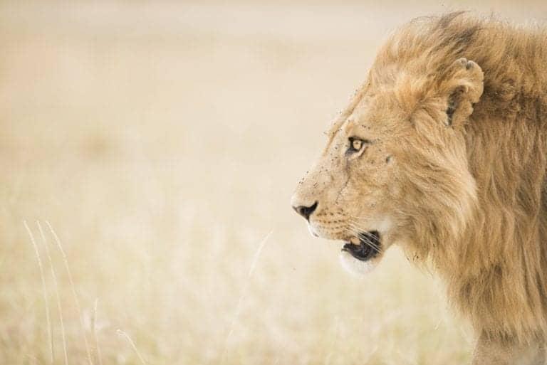 Op fotosafari naar Afrika? Zo plan je je droomreis!