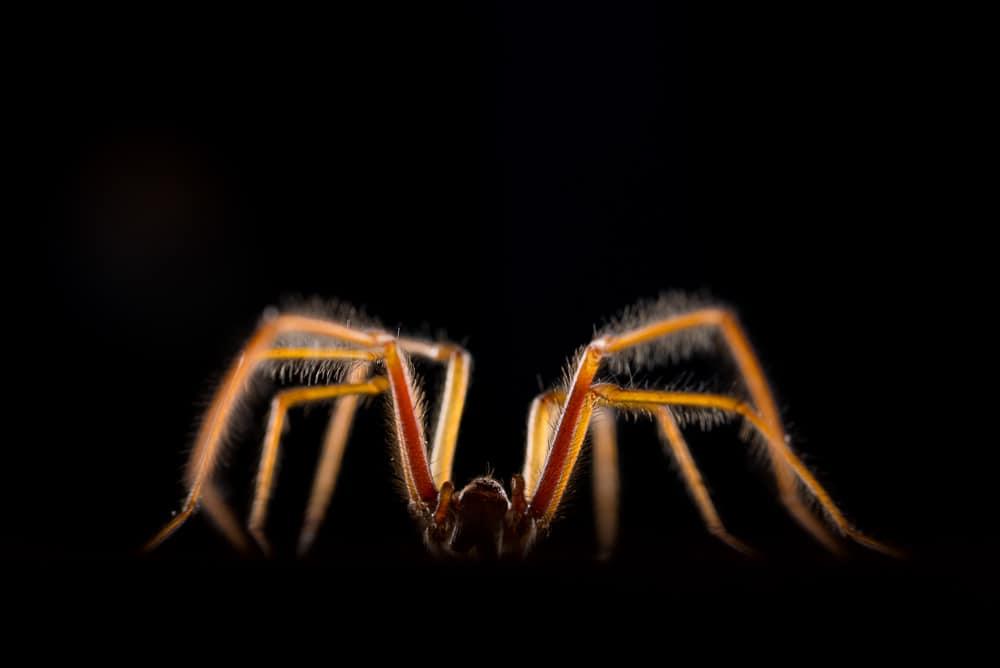 Spinnen Edwin Giesbers