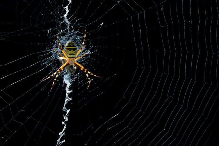 Spinnen fotograferen, hoe begin je er aan?