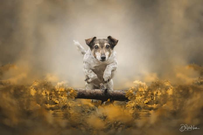 Hond in actie