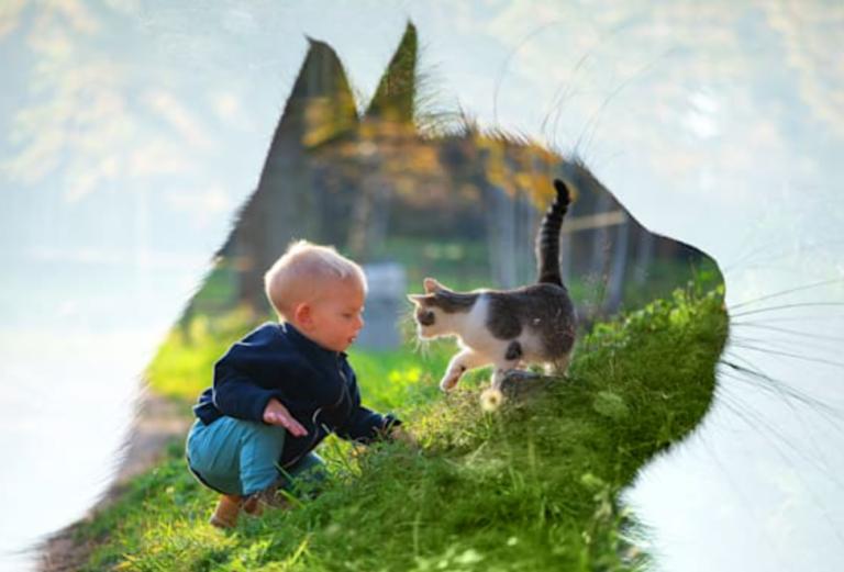 Photoshop Elements 2022 zet nog meer in op AI voor compositie en belichting